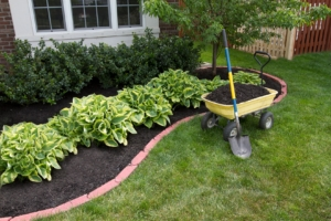 Mulch around bushes and green grass in yard