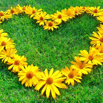 Grass with flowers in the shape of a heart