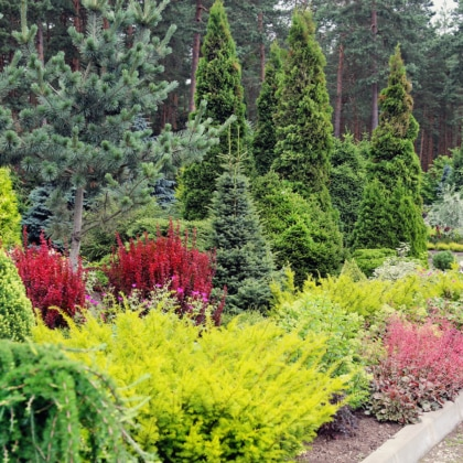 Shrubs and trees in landscaped yard